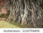 Buddha Head Entwined With Tree...