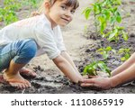 A Child Plants A Plant In The...