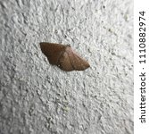 Small photo of Macro image of the Dotted Border - Geometridae on cement background with one sided light