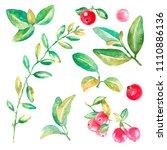 hand drawn watercolor set of...   Shutterstock . vector #1110886136