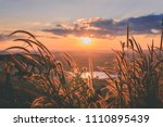 close up grass flower with... | Shutterstock . vector #1110895439
