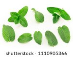 fresh mint isolated on white. | Shutterstock . vector #1110905366