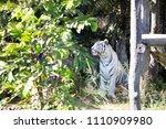 brasilia  df   brazil  july 21  ...   Shutterstock . vector #1110909980