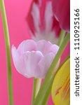 spring flowers banner. bunch of ... | Shutterstock . vector #1110925166