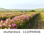 field of roses | Shutterstock . vector #1110944036