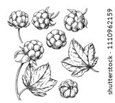 cloudberry vector drawing.... | Shutterstock .eps vector #1110962159