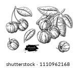 acerola fruit vector drawing... | Shutterstock .eps vector #1110962168