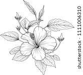 hibiscus flowers drawing and... | Shutterstock .eps vector #1111006310