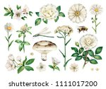 watercolor summer illustrations ...   Shutterstock . vector #1111017200