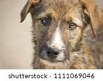 Stock photo stray puppy dog looking sad in a shelter 1111069046