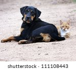 Stock photo dog and cat laying together 111108443