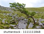 A tree in the area surrounding Belstone Tor in Dartmoor National Park, Devon, United Kingdom - stock photo