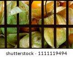 yellow berries  ground... | Shutterstock . vector #1111119494