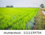 beautiful view of rural green...   Shutterstock . vector #1111159754