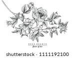 sketch floral botany collection.... | Shutterstock .eps vector #1111192100