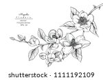 sketch floral botany collection.... | Shutterstock .eps vector #1111192109