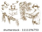 farmer picking coffee beans.... | Shutterstock .eps vector #1111196753