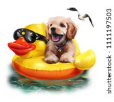 puppy floats on an inflatable... | Shutterstock . vector #1111197503