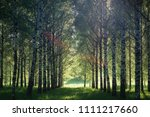 summer landscape photography of ... | Shutterstock . vector #1111217660