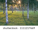 summer landscape photography of ... | Shutterstock . vector #1111217669