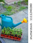 gardening on a country site in... | Shutterstock . vector #1111240280