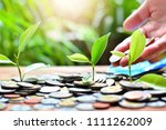 plant money coins saving growth ... | Shutterstock . vector #1111262009