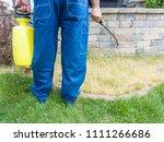 Gardener Spraying A Patch Grass - Fine Art prints