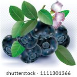 blueberries group with leaves... | Shutterstock .eps vector #1111301366