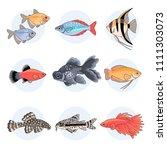 popular aquarium fishes  part 2.... | Shutterstock .eps vector #1111303073