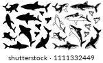 set of monochrome shark vector... | Shutterstock .eps vector #1111332449