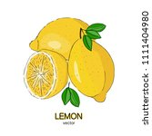 sketch of fresh lemons. vector... | Shutterstock .eps vector #1111404980