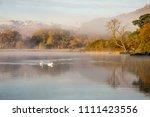 a pair of swans swim through...