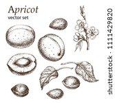 a detailed illustration an... | Shutterstock .eps vector #1111429820