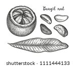 ink sketch of brazil nut. hand... | Shutterstock .eps vector #1111444133