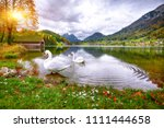 two white swans in crystal... | Shutterstock . vector #1111444658