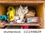 white long haired curious... | Shutterstock . vector #1111448639