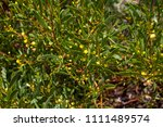 soft  beautiful  fluffy ...   Shutterstock . vector #1111489574