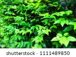 green leafs for background  ... | Shutterstock . vector #1111489850