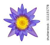 purple lotus flower on a white... | Shutterstock . vector #111151778