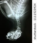 Small photo of Mandibular wiring cat x ray