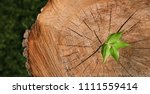 new life concept  close up of... | Shutterstock . vector #1111559414