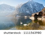 swans on hallstatt lake in... | Shutterstock . vector #1111563980