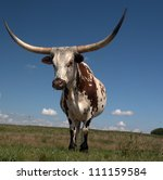 longhorn cow home on the range... | Shutterstock . vector #111159584