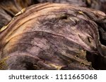 close up detail of dried red... | Shutterstock . vector #1111665068