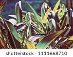 green garden leaf digital... | Shutterstock . vector #1111668710