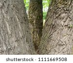 trees in the park. three large  ... | Shutterstock . vector #1111669508