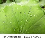 beautiful green leaves. water... | Shutterstock . vector #1111671938