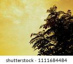 silhouette senna siamea leaves... | Shutterstock . vector #1111684484