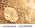 dry leaf on dirt with orange... | Shutterstock . vector #1111685000