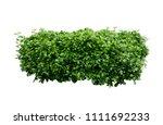 bush isolated on white... | Shutterstock . vector #1111692233